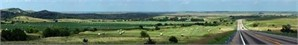 Polka Dots of Hay