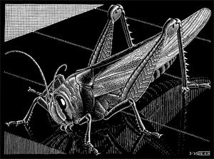 Grasshopper, 1935