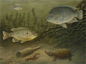 Fish & Musk Turtle by William B. Montgomery