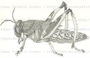 Grasshopper, 2009