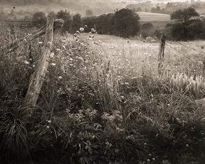 (#045) Queen Anne's Lace, Lady Borton's Farm (1/8) by Frank Hunter