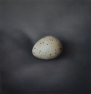 Quail Egg 21 (2/5), 2019
