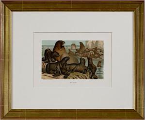 Sea Lion, 1885
