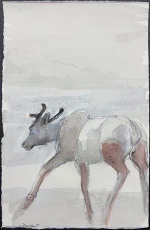 Animal Study IV: Elk Calf