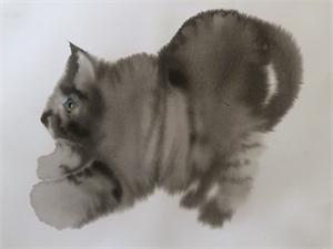 Scaredy Cat, 2019