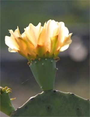 Cactus Aglow