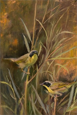 Yellowthroats on the Meadow