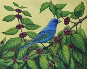 Indigo Bunting & Beauty Berry, 2015