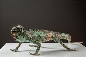 Small  Iguana