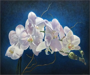 White Orchid, 2017