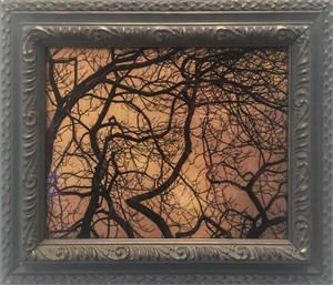 Sun Through Trees, London   (1/20), 2018