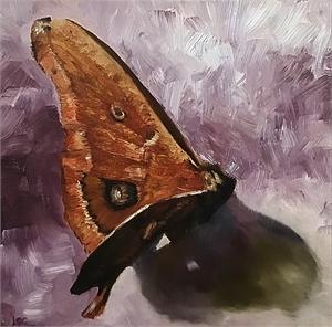 Polyphenus Moth, 2019