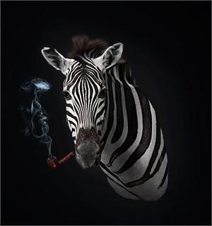 Smoking Zebra - Taxidermy Lounge