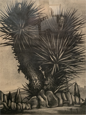 Sentinel of the Desert, Flowering Yucca, c. 1935-40