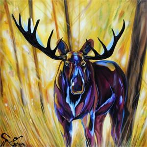 Moose 185299, 2019