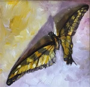 Swallowtail Moth, 2019