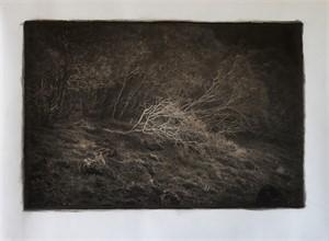 Fallen Tree, Mt. Etna, Sicily (1/30)