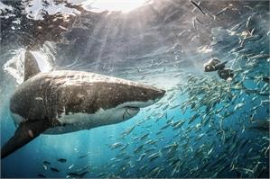 Underwater #8, 2019