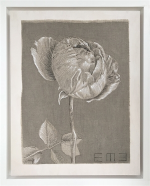 Antique Rose Study II by Emily Morgan Brown
