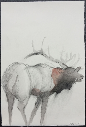 Animal Study III: Elk Calling