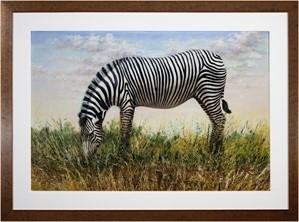 Grévy's Zebra, 2004