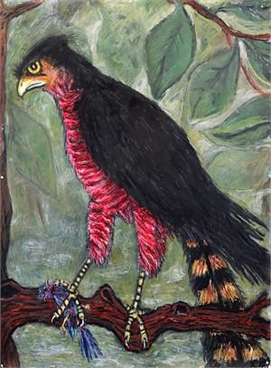 Cooper's Hawk, 2018
