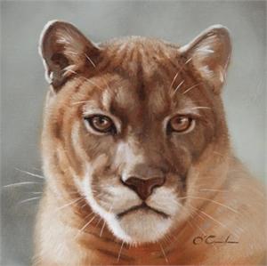 Puma Portrait, 2019