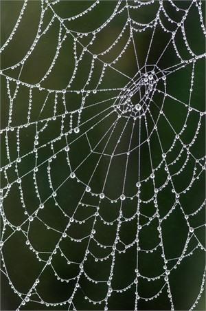 Web of Pearls (Edition 1)