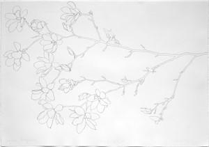 Japanese Magnolia, 2018