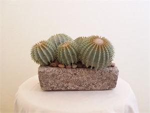Bedrock - Barrel Cactus #28, 2019