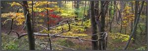 Smoky Mountain Tapestry #3 - North Carolina