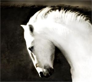 "Ghost Horse - Framed 38.5""x 36.5"" (8/200)"