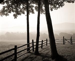 Tree and Early Morning Fog  Saulto Paul (1/21) by Frank Hunter