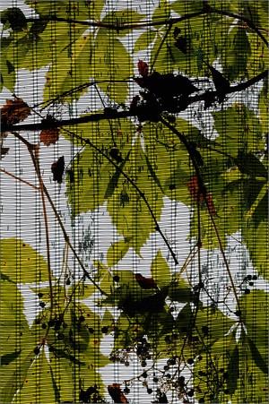 Greenhouse #3 (1/20)