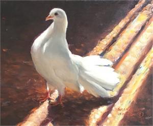 White Dove 20