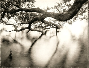 Low Country by Frank Hunter