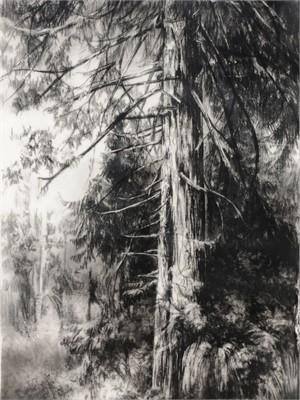 Hypatia's Woods I