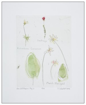 Our Wild Flowers: Page 2