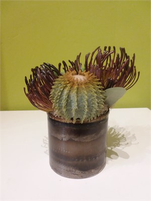 Mood -   protea, barrel cactus and donkey tail in burnished metal cup  #8034, 2019