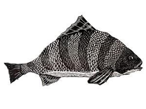 Pescador, 2019