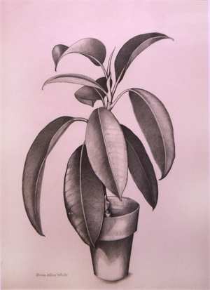Potted Plant, c. 1940