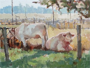 Charolais, Early Morning