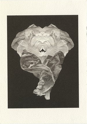 Lettuce Dance by Philip Krejcarek