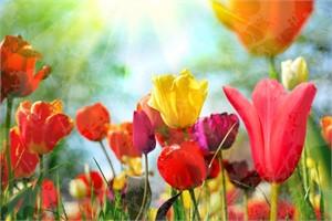 Tulip Ecstasy by Yankel Ginzburg