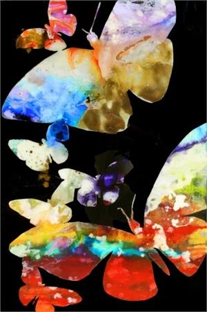 Les Papillons en Vol a Nuit, 2019