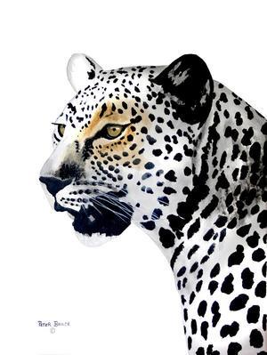 Leopard Portrait, 2018