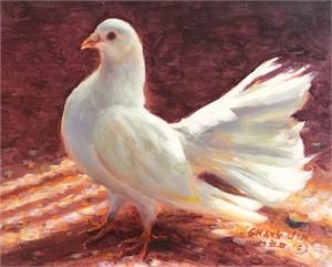 White Dove 15
