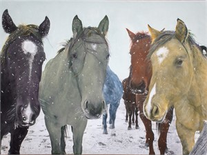 Six Snowy Horses with Matt Green