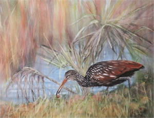 Limpkin by Sherry Egger