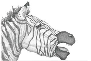 Zebra, 2013